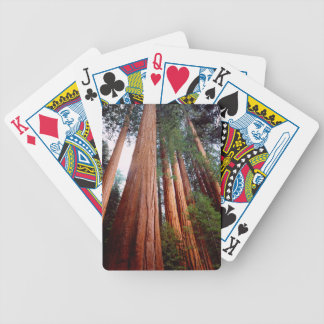 Old-growth Sequoia Redwood trees Bicycle Playing Cards