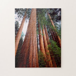 Old-growth Sequoia Redwood trees Jigsaw Puzzle