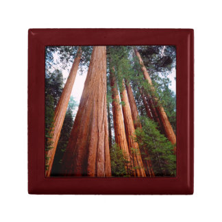 Old-growth Sequoia Redwood trees Keepsake Box