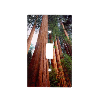 Old-growth Sequoia Redwood trees Light Switch Cover