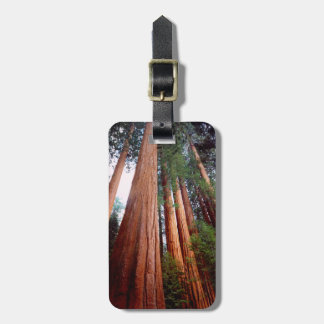 Old-growth Sequoia Redwood trees Luggage Tag