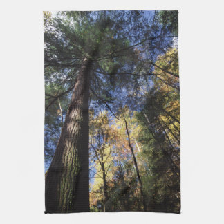 old growth trees kitchen towel