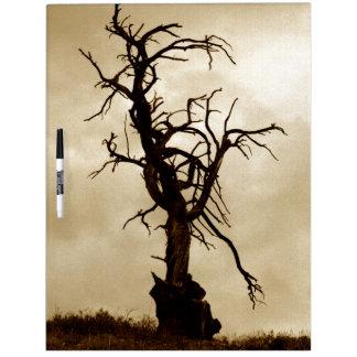 Old juniper tree dry erase board