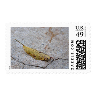 Old Leaf On Rock In Balboa Park Postage Stamp