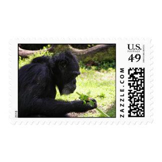 Old Man Chimp Postage Stamps
