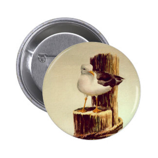 OLD MAN SEAGULL by SHARON SHARPE Button