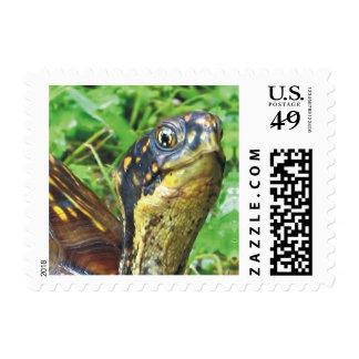 Old Man Turtle Postage