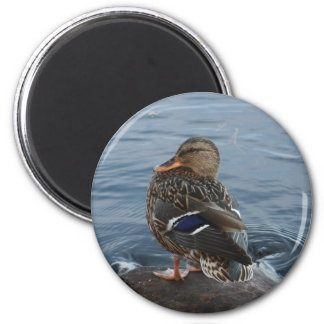 Old McDonald had a duck........... 2 Inch Round Magnet