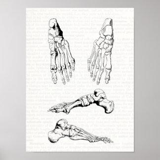 Old Medical Art Human Anatomy Bones of the Foot Poster