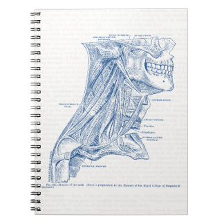 Old Medical Drawing Muscles of the Neck Blue Spiral Notebook