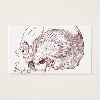 Old Medical Drawing Temporal Muscle Business Card