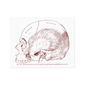 Old Medical Drawing Temporal Muscle Canvas Print