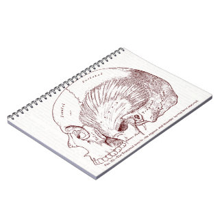 Old Medical Drawing Temporal Muscle Spiral Notebook
