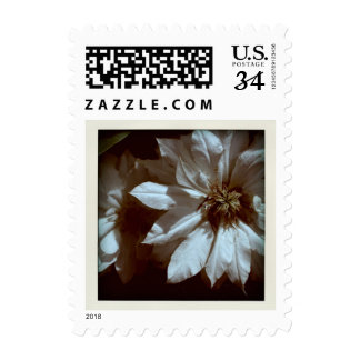 Old Memories - Clematis Floral Photography Postage