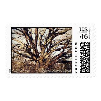 Old oak tree postage stamp