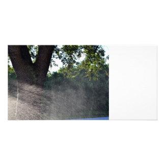 old oak trunk with sprinkler photo card