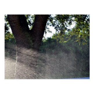 old oak trunk with sprinkler postcard