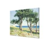 Old Olive Trees, Bordighera Canvas Prints