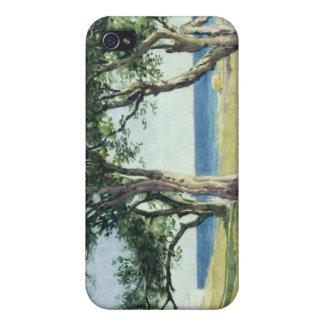 Old Olive Trees, Bordighera iPhone 4 Case