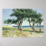 Old Olive Trees, Bordighera Poster