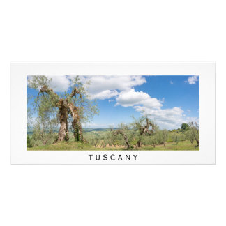 Old olive trees in a landscape in Tuscany Card