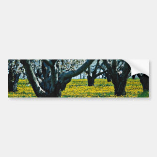 Old orchard  flowers bumper sticker