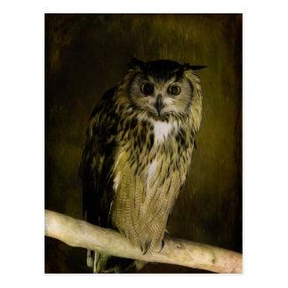 Old Owl of Wisdom Postcard
