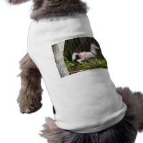 Old Paint T-Shirt