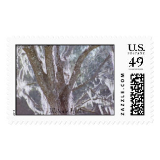 Old pecan tree postage stamps
