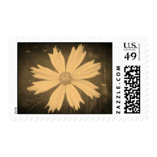 Old photo Yellow Cosmos Flower Close-up 2 Postage Stamps