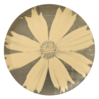 Old photo Yellow Cosmos Flower Close-up 3 Plate