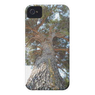 Old Pine iPhone 4 Covers