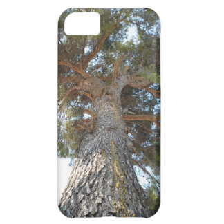 Old Pine iPhone 5C Cover