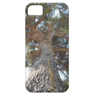 Old Pine iPhone SE/5/5s Case