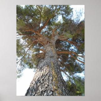 Old Pine Print
