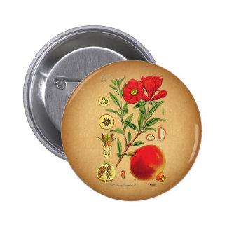 Old Pomegranate Illustration Button