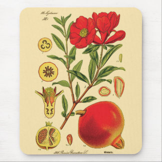 Old Pomegranate Illustration Mouse Pad