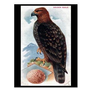 Old Postcard - Golden Eagle