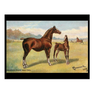 Old Postcard - Horses