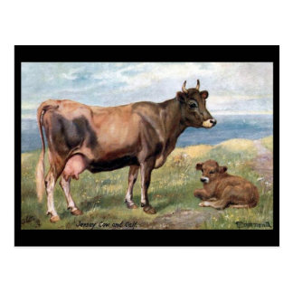 Old Postcard - Jersey Cow and Calf