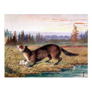 Old Postcard - Pine Marten