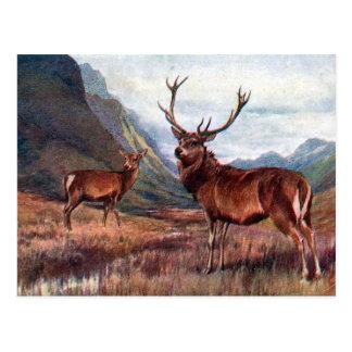 Old Postcard - Red Deer