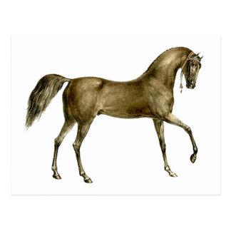 Old Print Horse Image Postcard