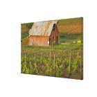 Old red barn at the edge of Zinfandel vineyard Canvas Print