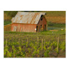 Old red barn at the edge of Zinfandel vineyard Postcard