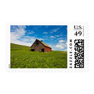 Old, red barn in field of chickpeas postage stamp