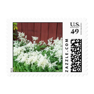 Old Red Barn with White Heather Flowers Postage