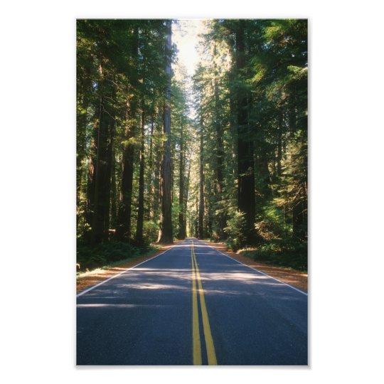 Old Redwood Highway Photo Print
