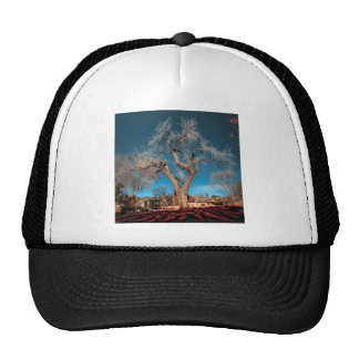 Old Roots of Canyon Road Trucker Hat