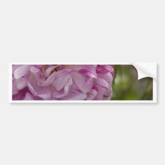 old rose bumper sticker